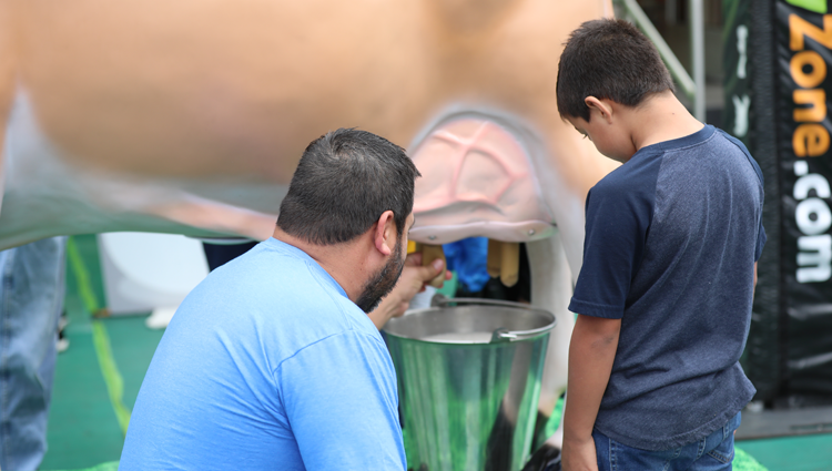 man and young boy milking a cow at the dairy discovery zone exhibit