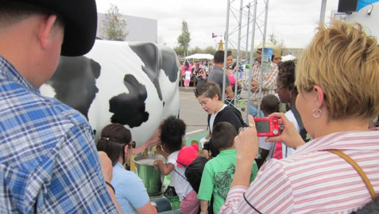 group milking a fiberglass cow