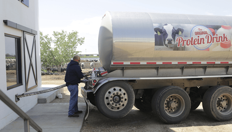 Truckers pick up milk from a dairy farm