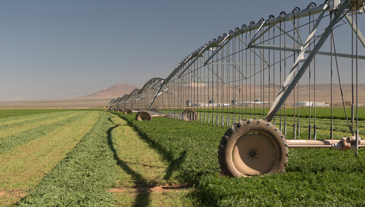 crops growing in a field with an irrigation sprinkler