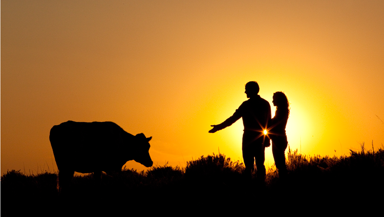 man and woman reaching out to a cow in silhouette at sunset