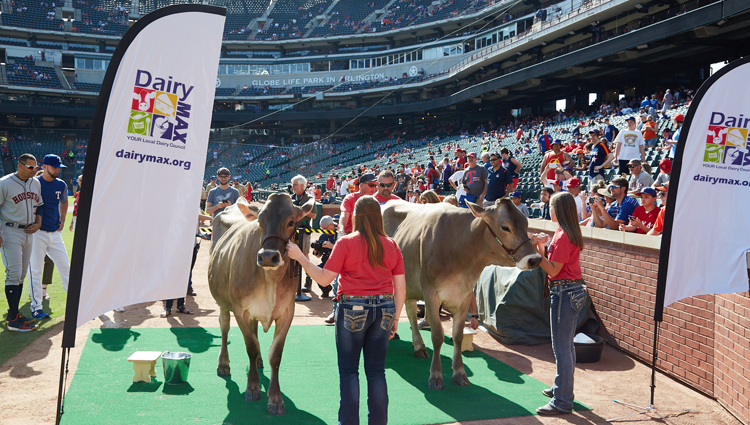 women with jersey cows at a rangers game