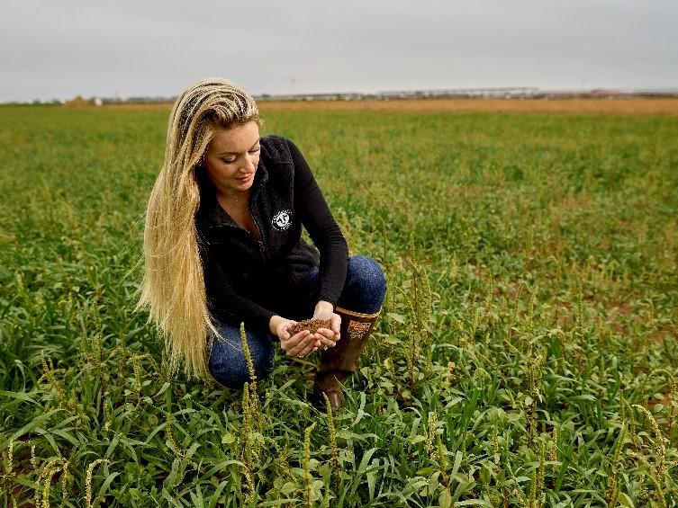 Tara in a field of crops